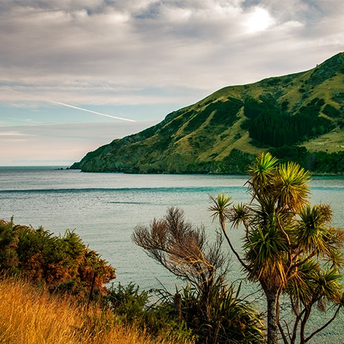 Cable Bay Walkways New